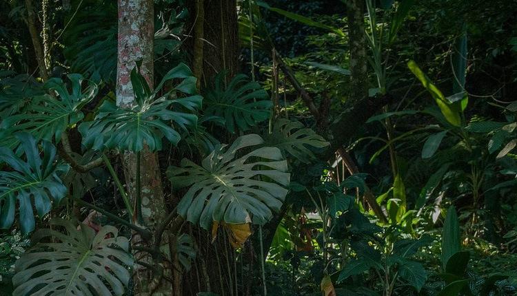 Passeio - Floresta da Tijuca